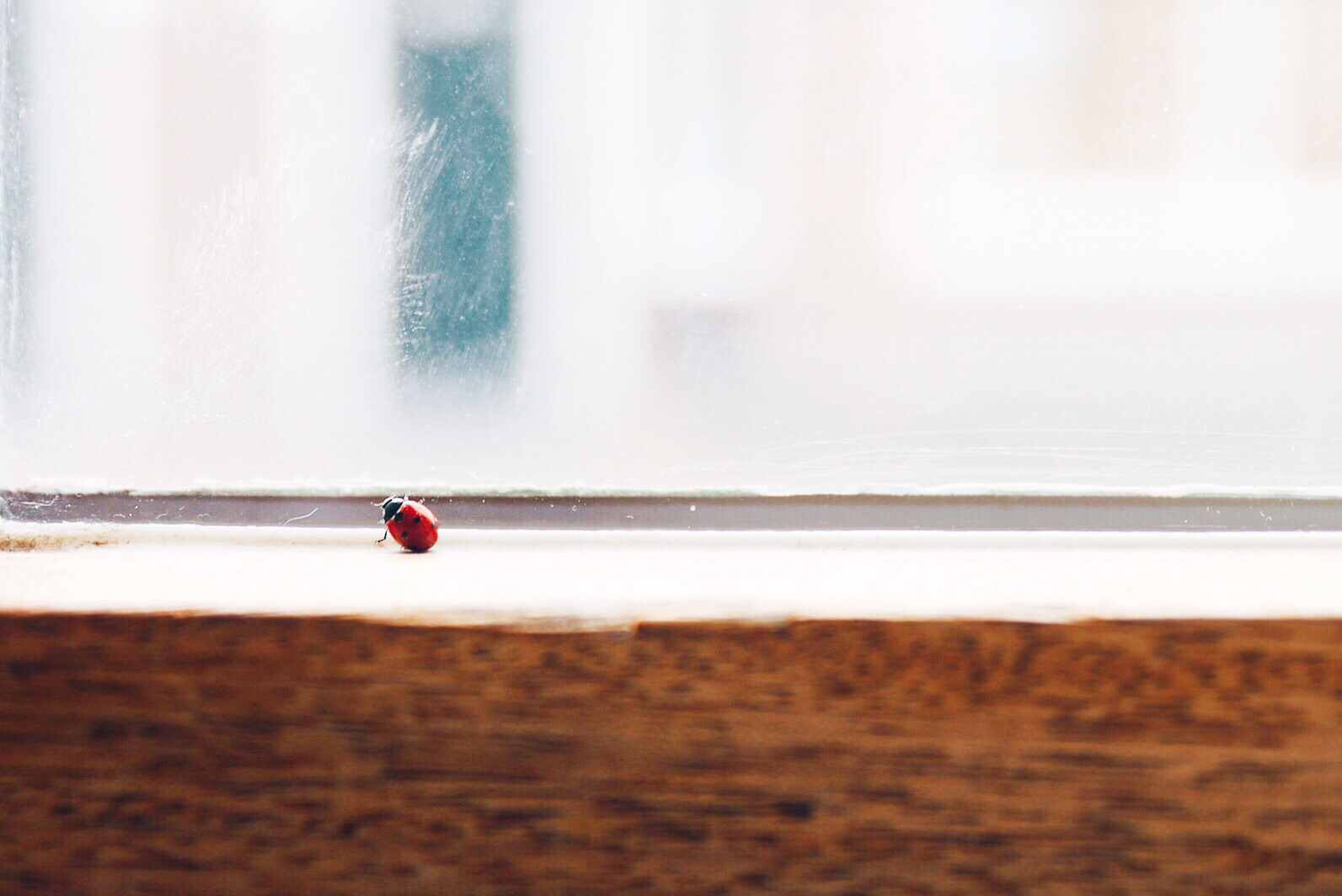 ladybug lessons